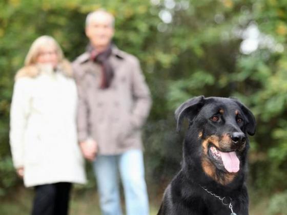 SLO County Dog Training